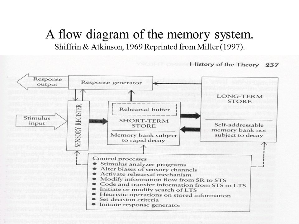 A flow diagram of the memory system. Shiffrin & Atkinson, 1969 Reprinted from Miller (1997).