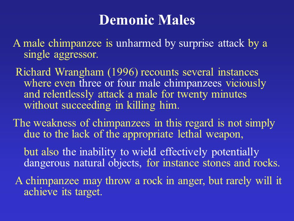 Demonic Males A male chimpanzee is unharmed by surprise attack by a single aggressor.