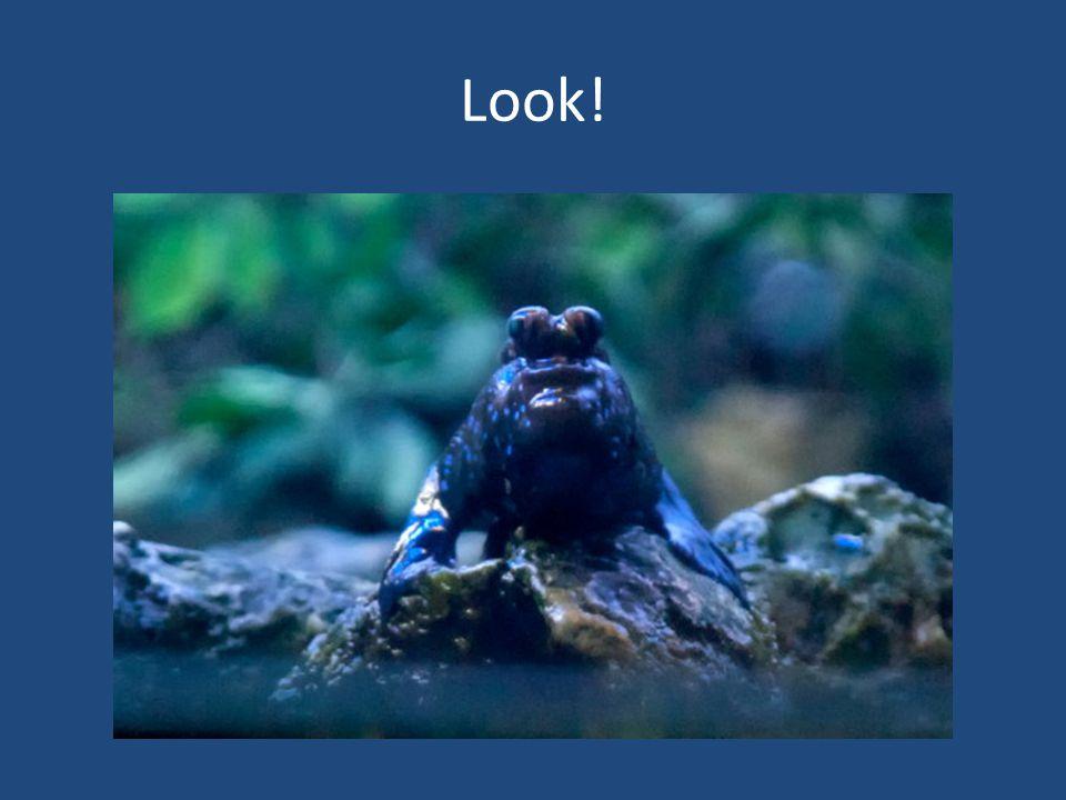 Look!