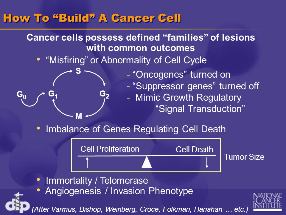 Misfiring or Abnormality of Cell Cycle Imbalance of Genes Regulating Cell Death Immortality / Telomerase Angiogenesis / Invasion Phenotype How To Build A Cancer Cell Cancer cells possess defined families of lesions with common outcomes G1G1 S G2G2 M G0G0 - Oncogenes turned on - Suppressor genes turned off - Mimic Growth Regulatory Signal Transduction Tumor Size Cell Death Cell Proliferation (After Varmus, Bishop, Weinberg, Croce, Folkman, Hanahan … etc.)