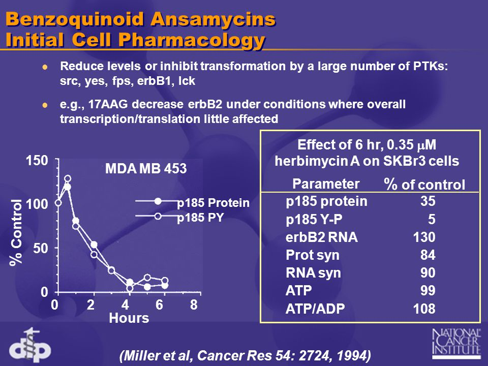 Benzoquinoid Ansamycins Initial Cell Pharmacology Reduce levels or inhibit transformation by a large number of PTKs: src, yes, fps, erbB1, lck e.g., 17AAG decrease erbB2 under conditions where overall transcription/translation little affected (Miller et al, Cancer Res 54: 2724, 1994) Effect of 6 hr, 0.35  M herbimycin A on SKBr3 cells p185 protein p185 Y-P erbB2 RNA Prot syn RNA syn ATP ATP/ADP 35 5 130 84 90 99 108 Parameter % of control 02468 150 100 50 0 MDA MB 453 % Control p185 Protein p185 PY Hours