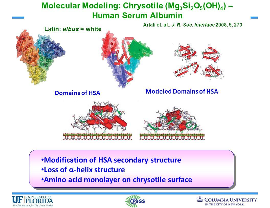 Molecular Modeling: Chrysotile (Mg 3 Si 2 O 5 (OH) 4 ) – Human Serum Albumin Domains of HSA Modeled Domains of HSA Modification of HSA secondary struc