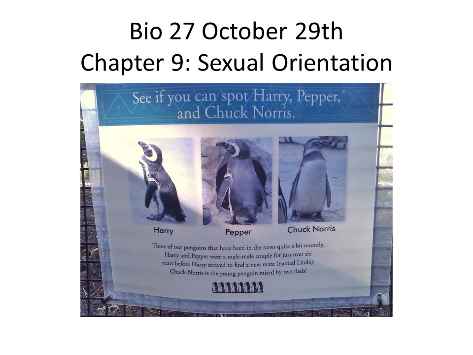 Bio 27 October 29th Chapter 9: Sexual Orientation