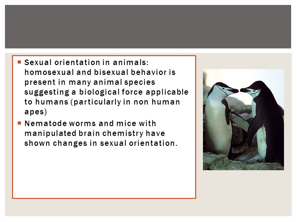  Sexual orientation in animals: homosexual and bisexual behavior is present in many animal species suggesting a biological force applicable to humans