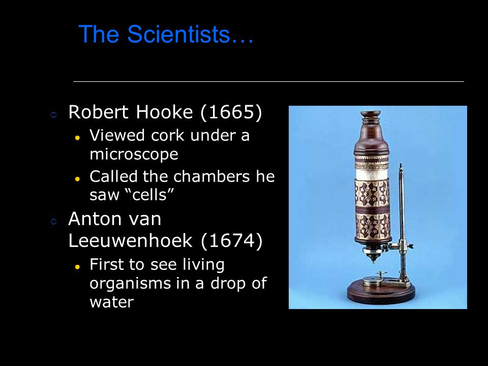 "The Scientists… ○ Robert Hooke (1665) ● Viewed cork under a microscope ● Called the chambers he saw ""cells"" ○ Anton van Leeuwenhoek (1674) ● First to"
