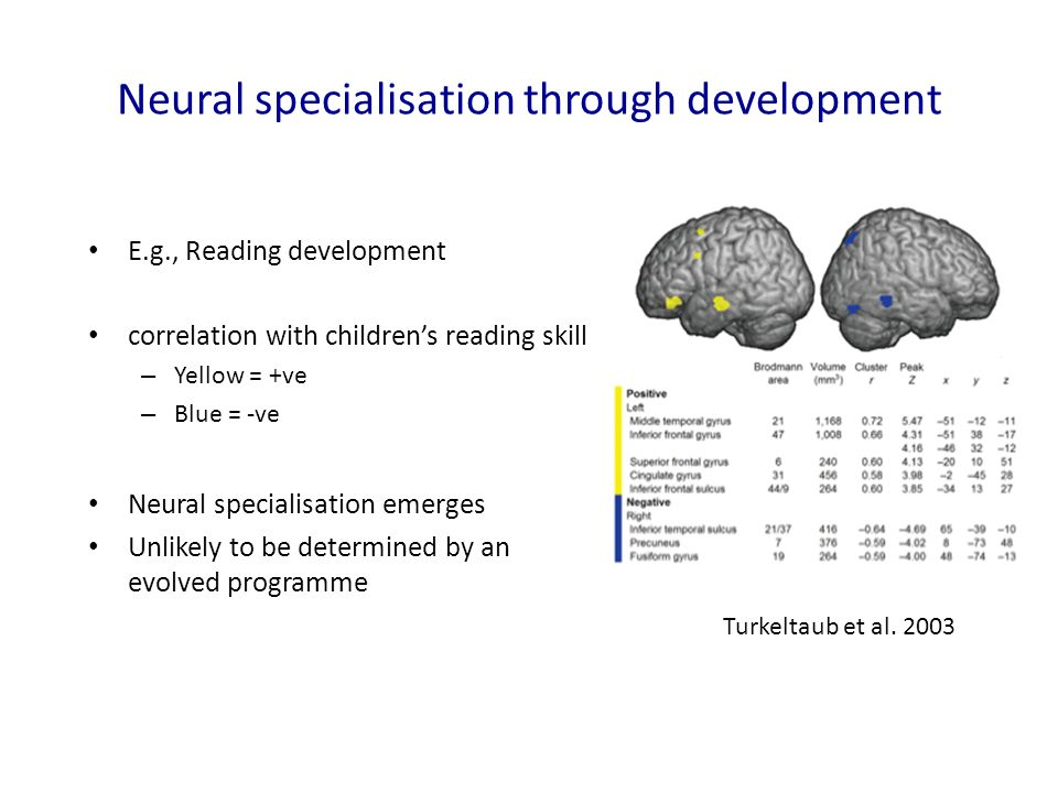 Neural specialisation through development E.g., Reading development correlation with children's reading skill – Yellow = +ve – Blue = -ve Neural specialisation emerges Unlikely to be determined by anevolved programme Turkeltaub et al.