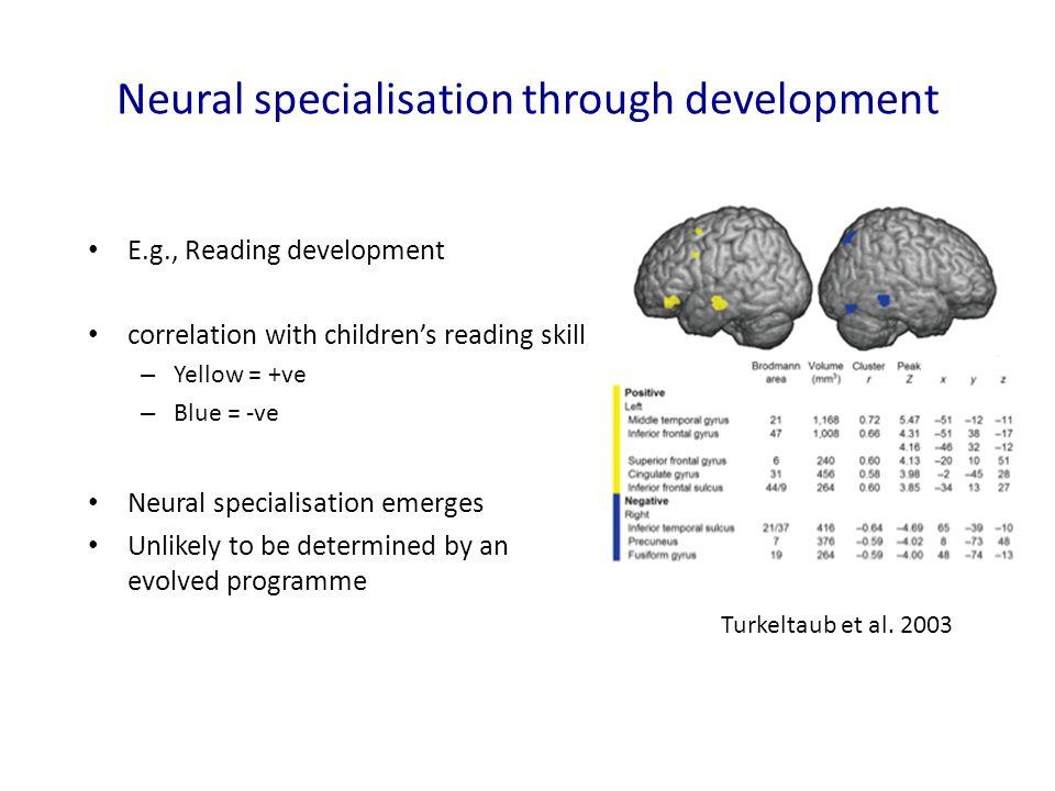 Neural specialisation through development E.g., Reading development correlation with children's reading skill – Yellow = +ve – Blue = -ve Neural speci