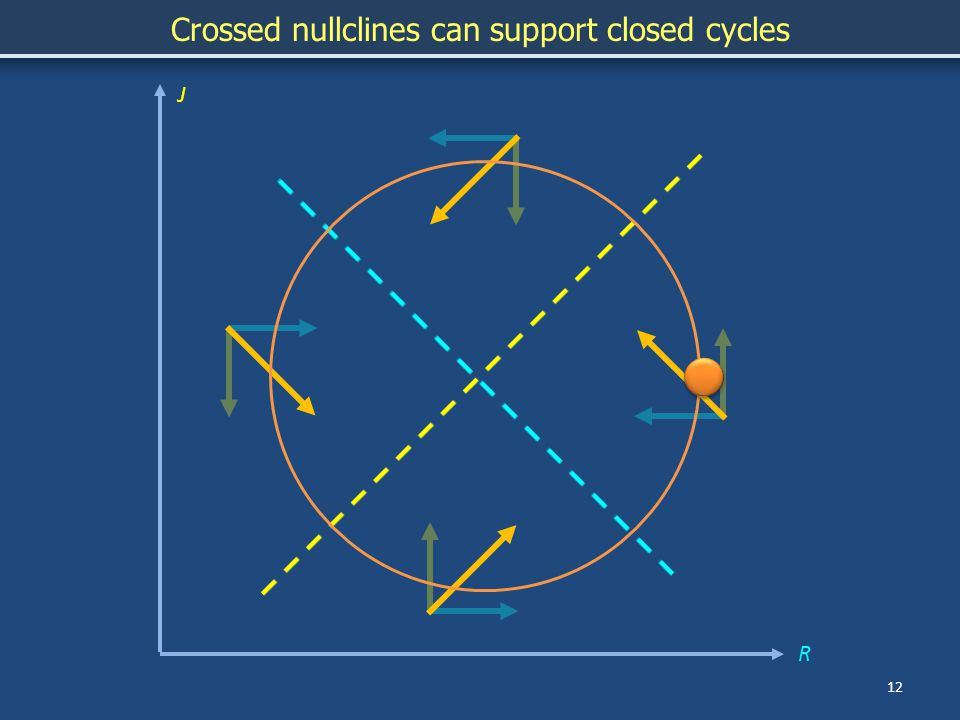 12 J Crossed nullclines can support closed cycles R
