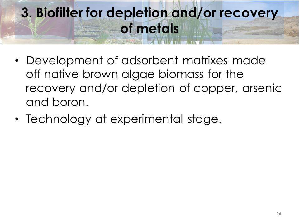 3. Biofilter for depletion and/or recovery of metals Development of adsorbent matrixes made off native brown algae biomass for the recovery and/or dep
