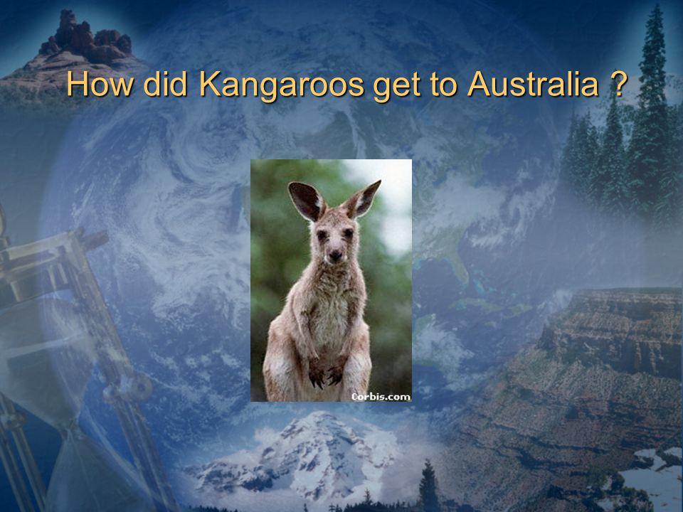 How did Kangaroos get to Australia