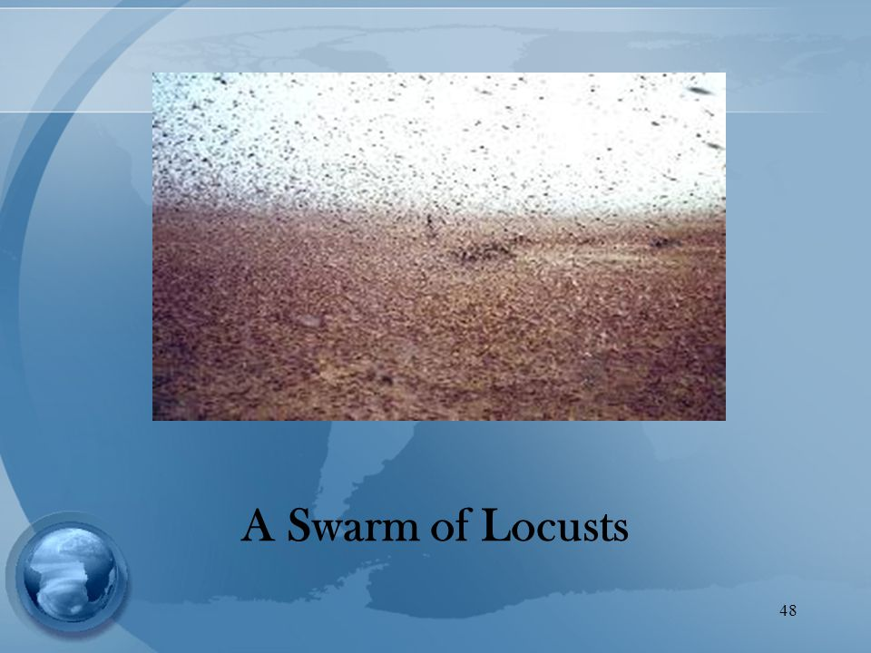48 A Swarm of Locusts