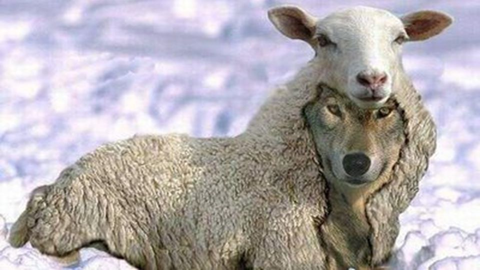 "Jesus warned us… ""Beware of false prophets, who come to you in sheep's clothing, but inwardly they are ravenous wolves. Matthew 7:15"