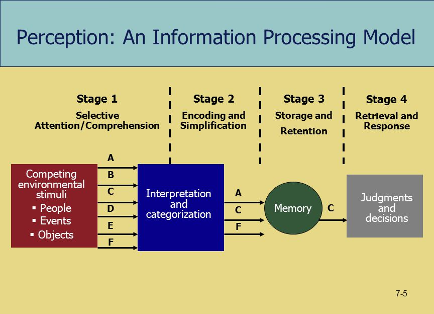 Perception: An Information Processing Model Competing environmental stimuli  People  Events  Objects Interpretation and categorization Stage 1 Sele