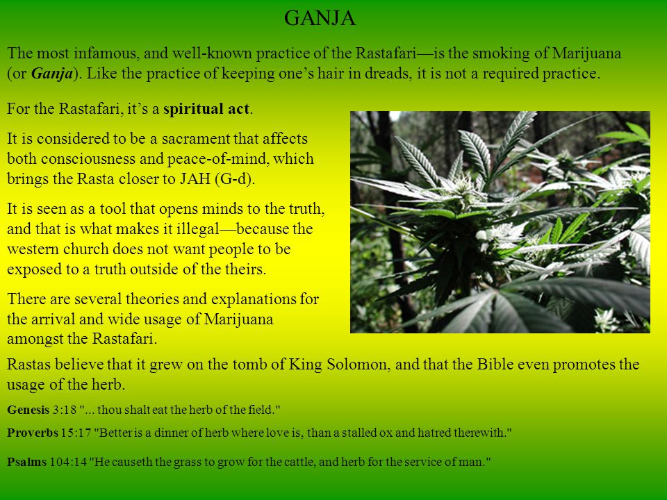 GANJA The most infamous, and well-known practice of the Rastafari—is the smoking of Marijuana (or Ganja).