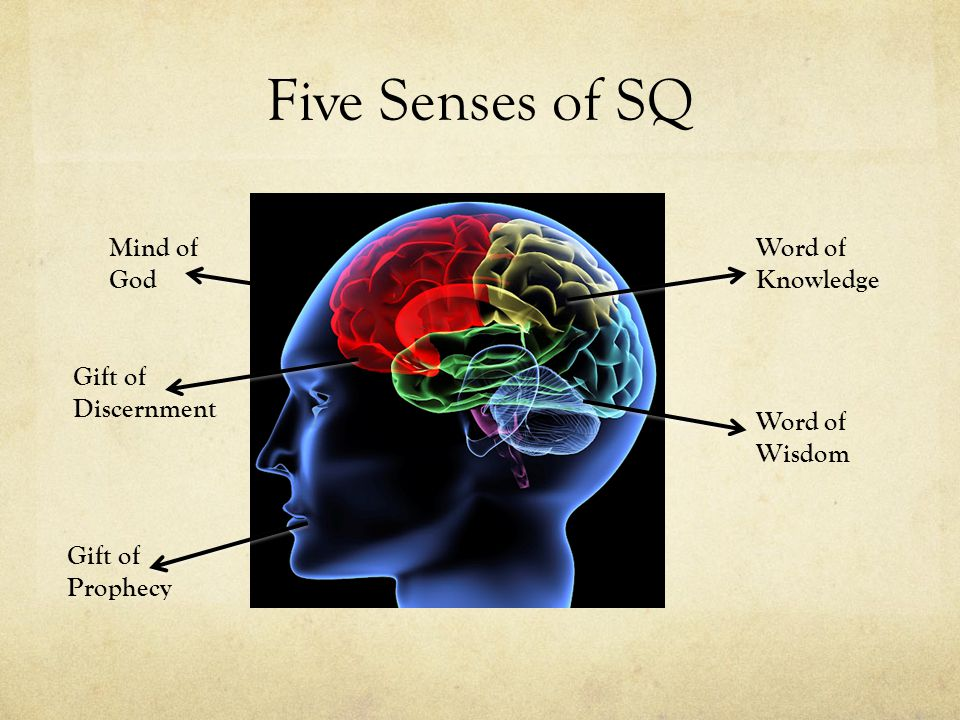 Five Senses of SQ Mind of God Gift of Discernment Gift of Prophecy Word of Wisdom Word of Knowledge