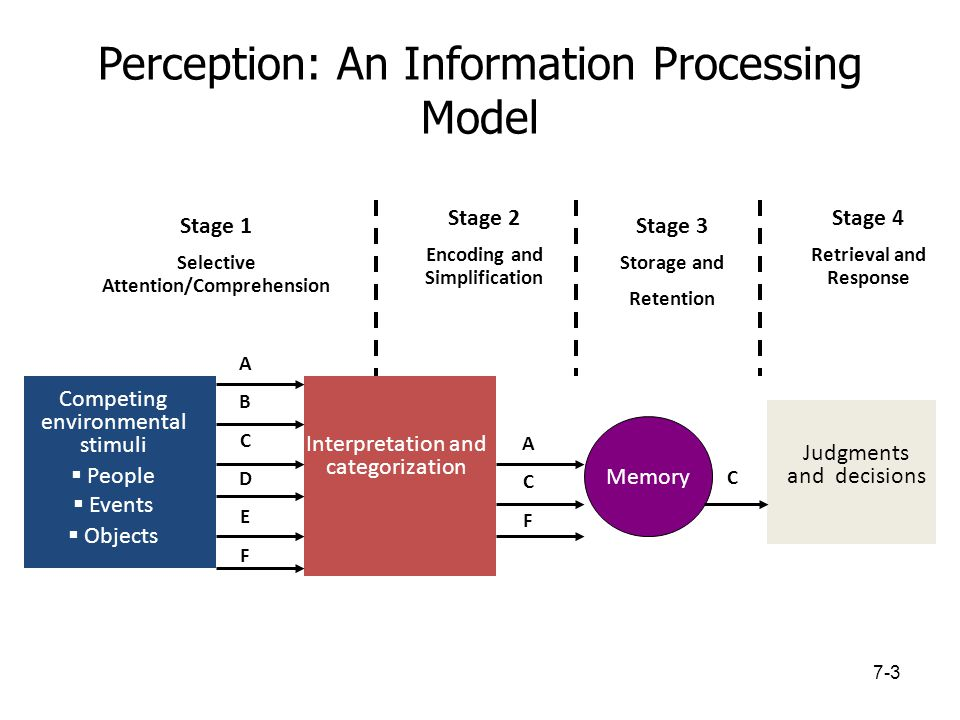 Perception: An Information Processing Model Competing environmental stimuli  People  Events  Objects Interpretation and categorization Stage 1 Sele