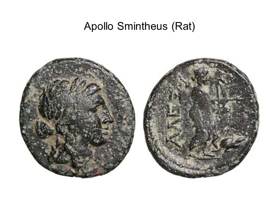 Apollo Smintheus (Rat)
