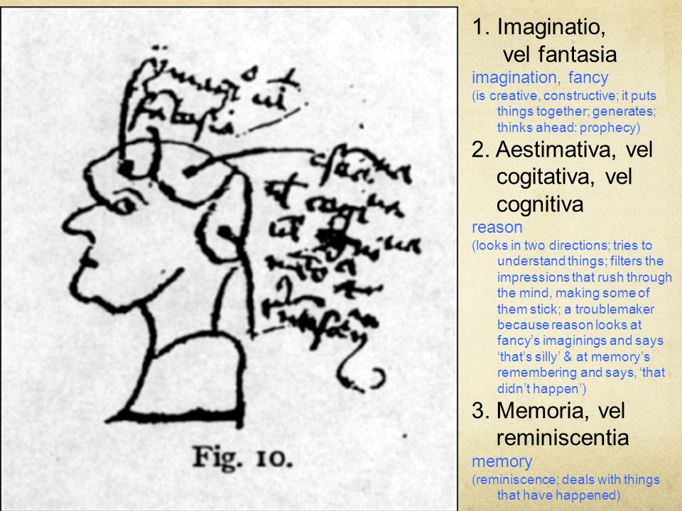 1.Imaginatio, vel fantasia imagination, fancy (is creative, constructive; it puts things together; generates; thinks ahead: prophecy) 2. Aestimativa,