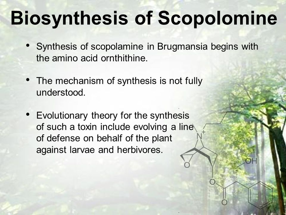 Biosynthesis of Scopolomine Synthesis of scopolamine in Brugmansia begins with the amino acid ornthithine.