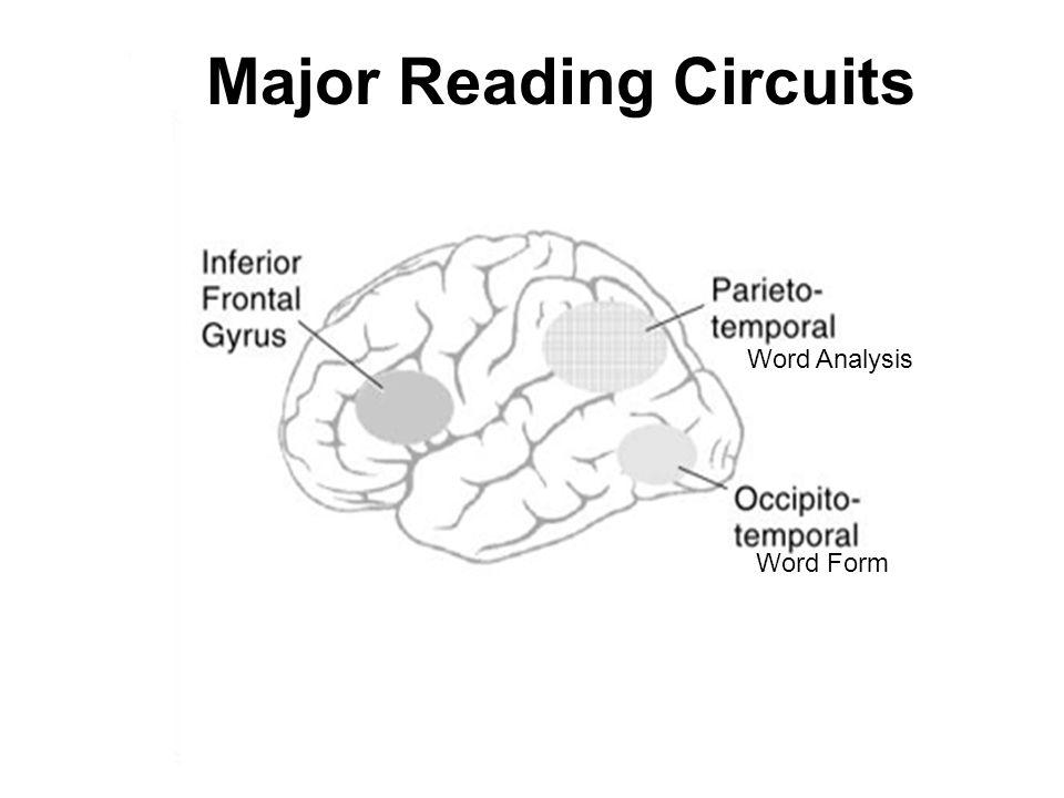 Major Reading Circuits Word Form Word Analysis