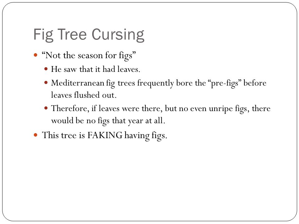 Fig Tree Cursing Not the season for figs He saw that it had leaves.