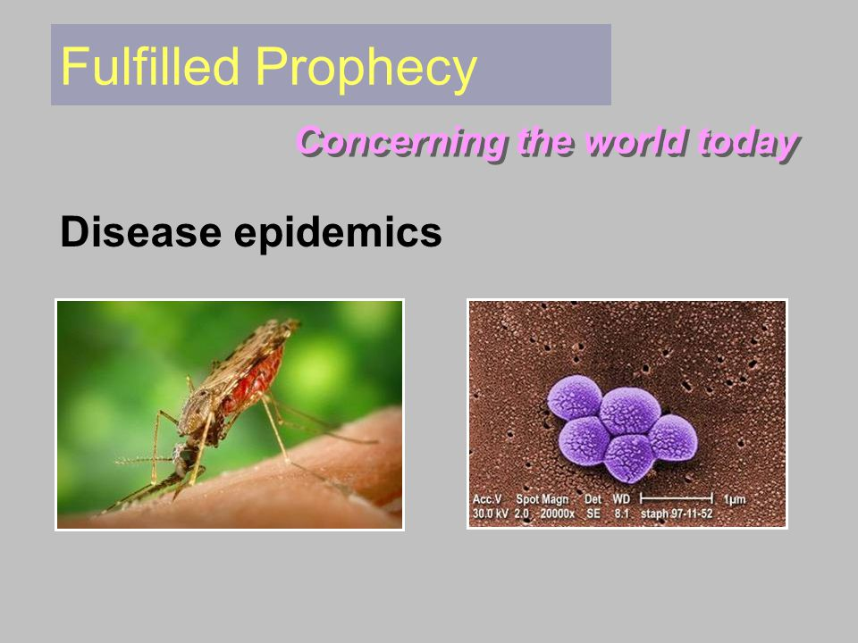 Fulfilled Prophecy Concerning the world today Disease epidemics
