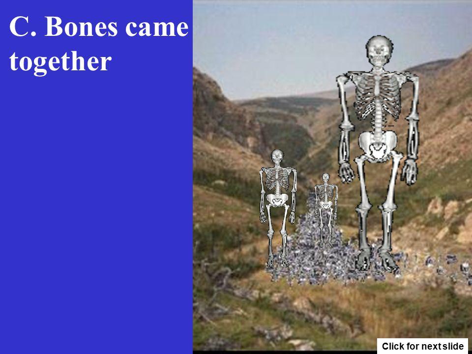 C. Bones came together Click for next slide