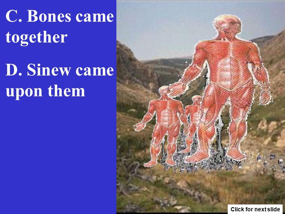 D. Sinew came upon them C. Bones came together Click for next slide