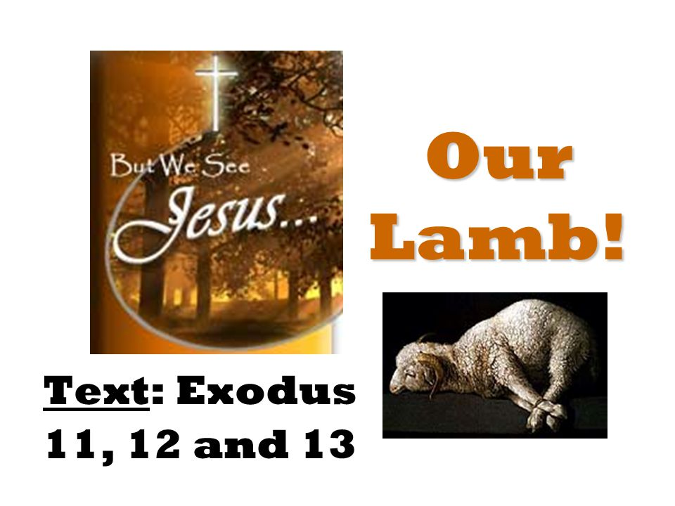 Our Lamb! Text: Exodus 11, 12 and 13