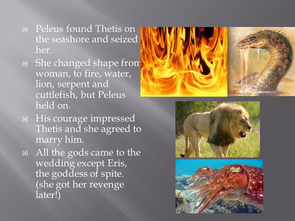  Peleus found Thetis on the seashore and seized her.