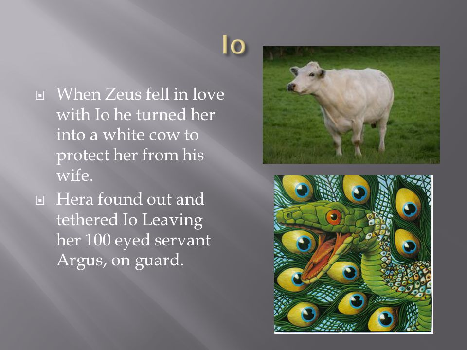  When Zeus fell in love with Io he turned her into a white cow to protect her from his wife.