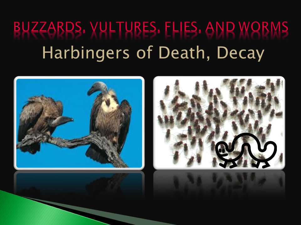 Harbingers of Death, Decay