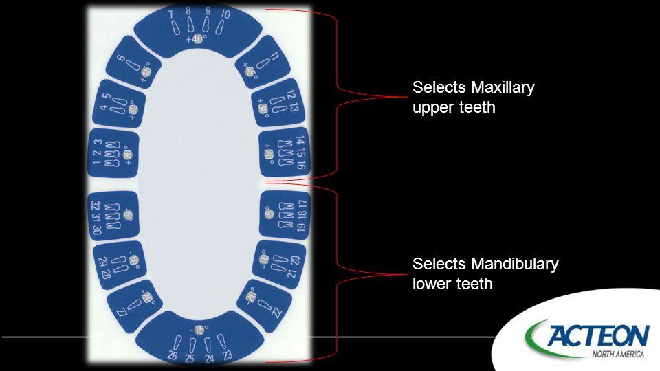 Selects Maxillary upper teeth Selects Mandibulary lower teeth