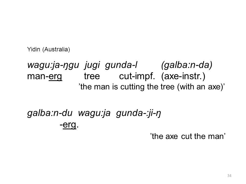 Yidin (Australia) wagu:ja-ŋgu jugi gunda-l (galba:n-da) man-erg tree cut-impf.