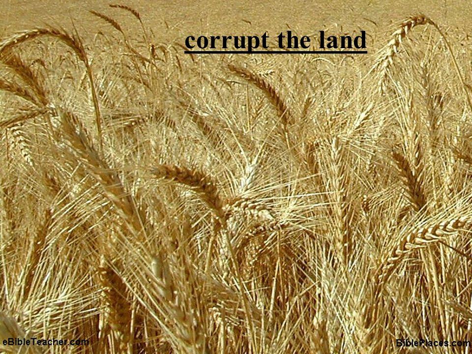 corrupt the land