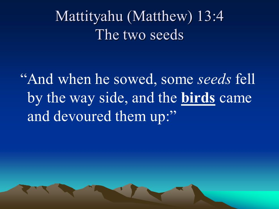 """Mattityahu (Matthew) 13:4 The two seeds """"And when he sowed, some seeds fell by the way side, and the birds came and devoured them up:"""""""