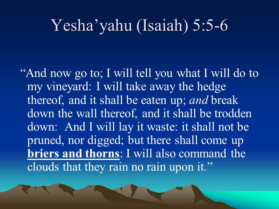 """Yesha'yahu (Isaiah) 5:5-6 """"And now go to; I will tell you what I will do to my vineyard: I will take away the hedge thereof, and it shall be eaten up;"""