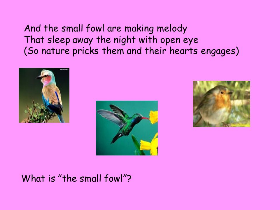 And the small fowl are making melody That sleep away the night with open eye (So nature pricks them and their hearts engages) What is the small fowl