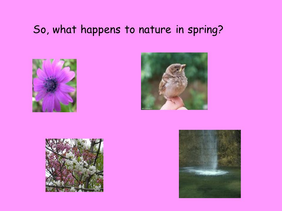 So, what happens to nature in spring