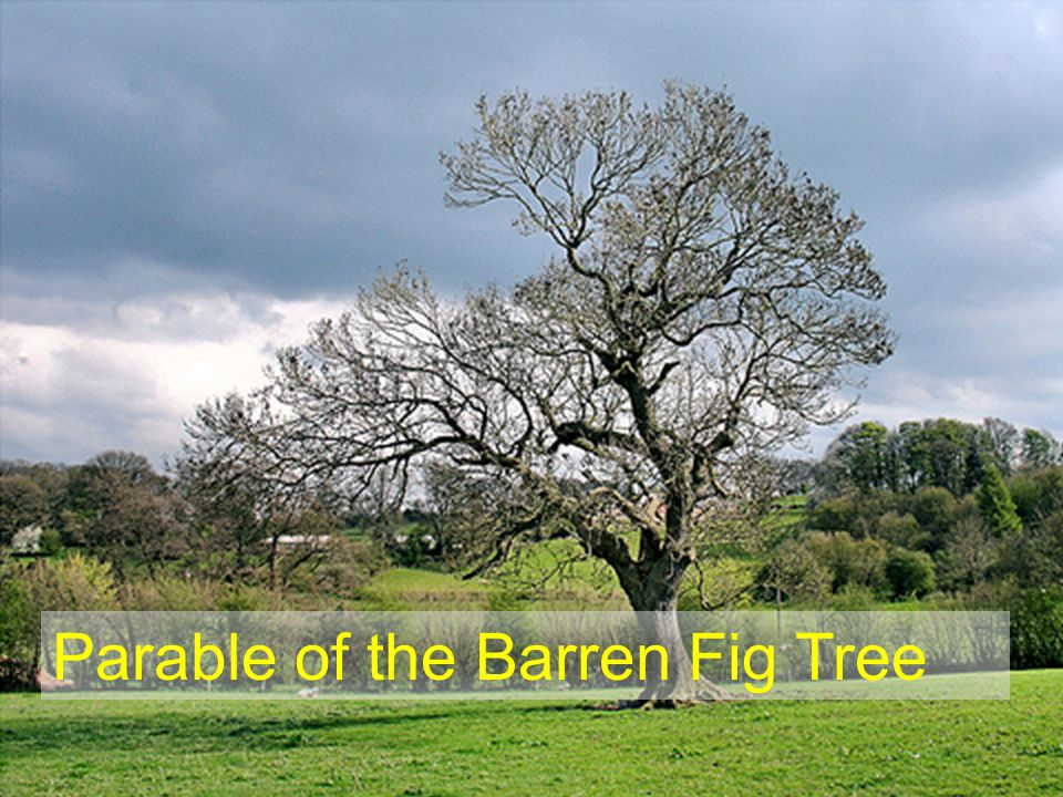 Parable of the Barren Fig Tree