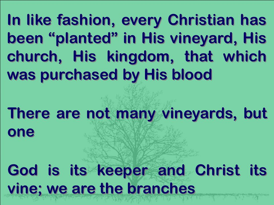 In like fashion, every Christian has been planted in His vineyard, His church, His kingdom, that which was purchased by His blood There are not many vineyards, but one God is its keeper and Christ its vine; we are the branches