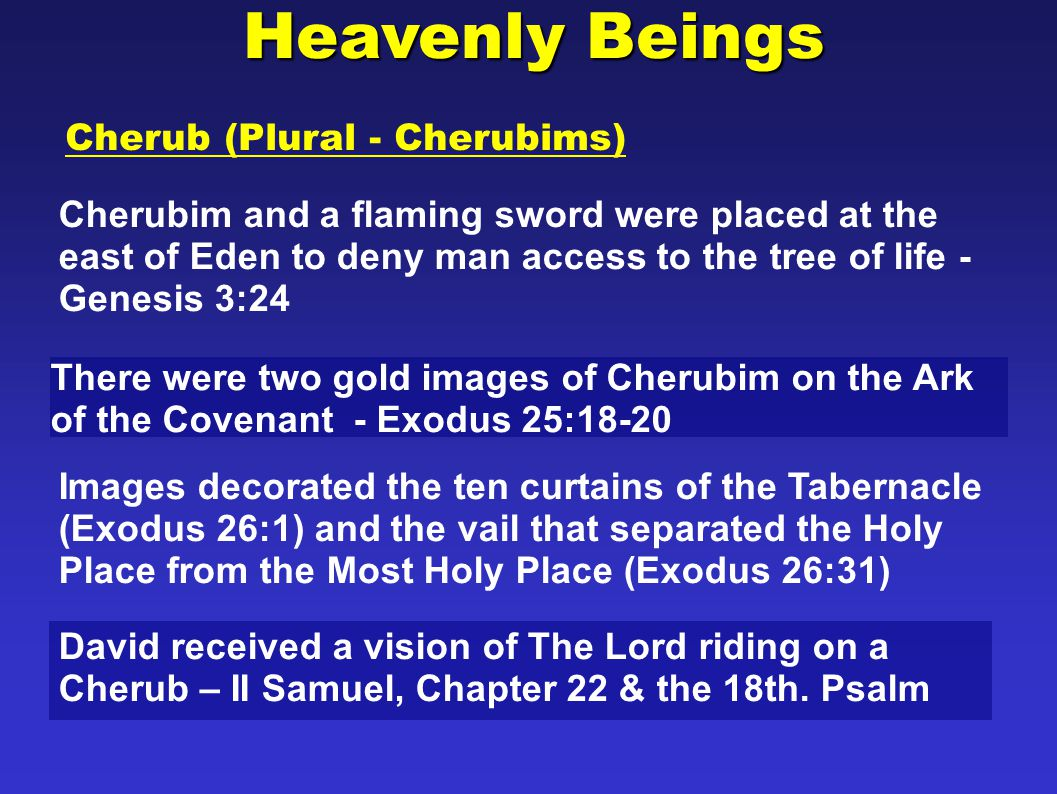 Cherub (Plural - Cherubims) Ezekiel saw cherubim in a vision – Ezekiel Chapter 10 Heavenly Beings There were two gold images of Cherubims that stood in the oracle of the Temple that were ten cubits (approximately 15 feet) tall with a wing span of ten cubits (I Kings 6:23-28).