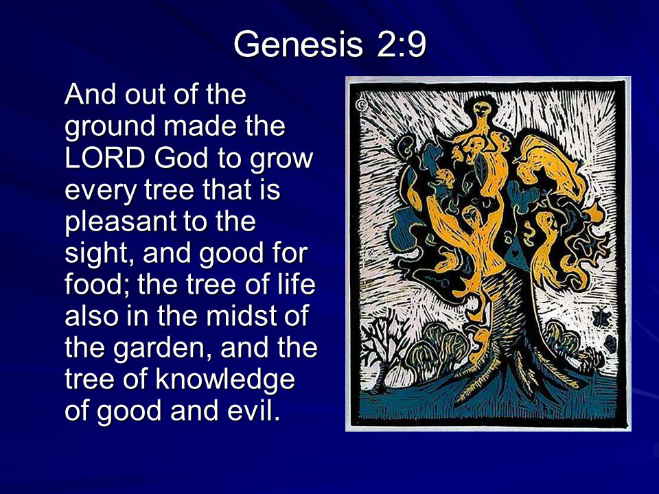 Genesis 3 1 Now the serpent was more subtil than any beast of the field which the LORD God had made.