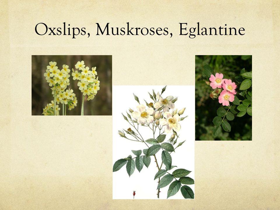 Oxslips, Muskroses, Eglantine
