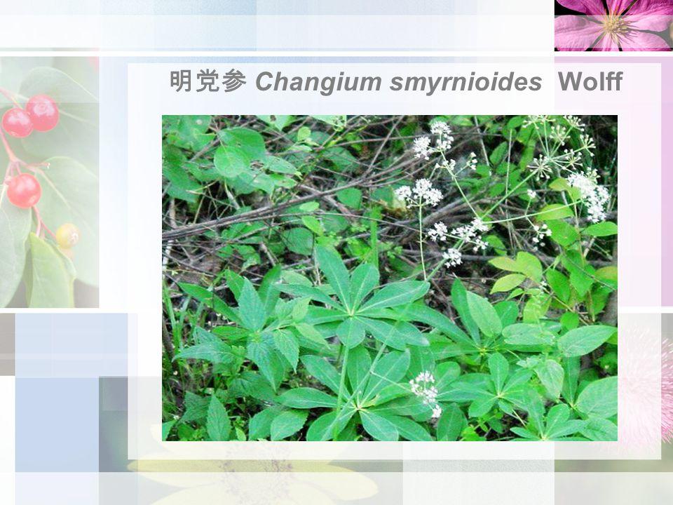 明党参 Changium smyrnioides Wolff