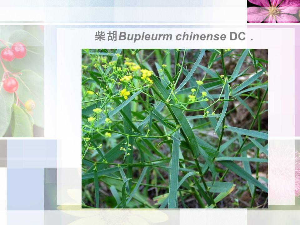 柴胡 Bupleurm chinense DC .