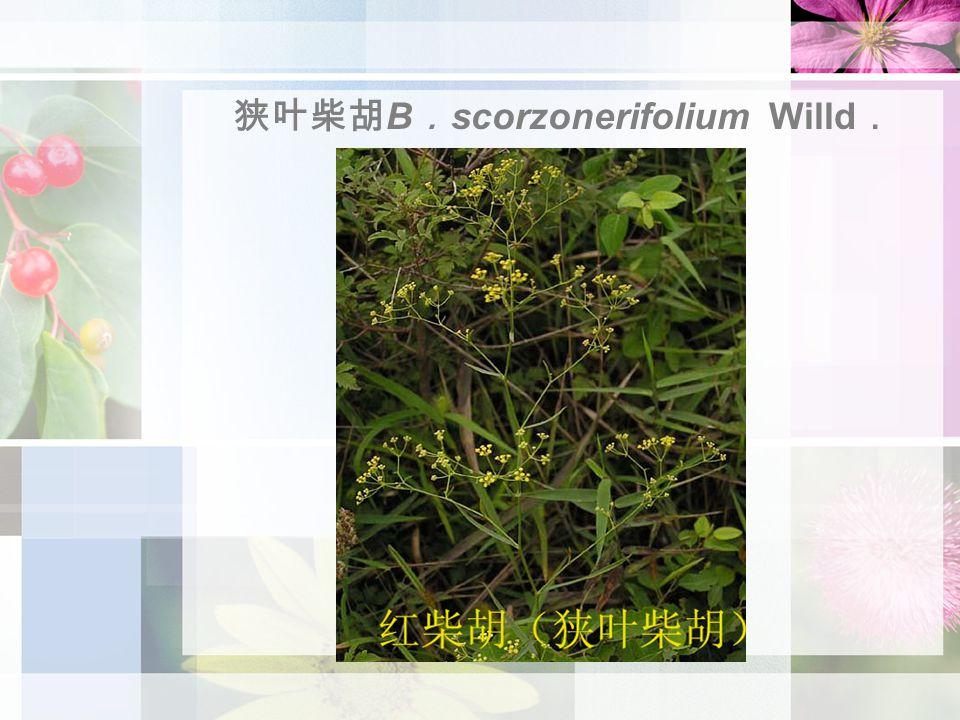 狭叶柴胡 B . scorzonerifolium Willd .