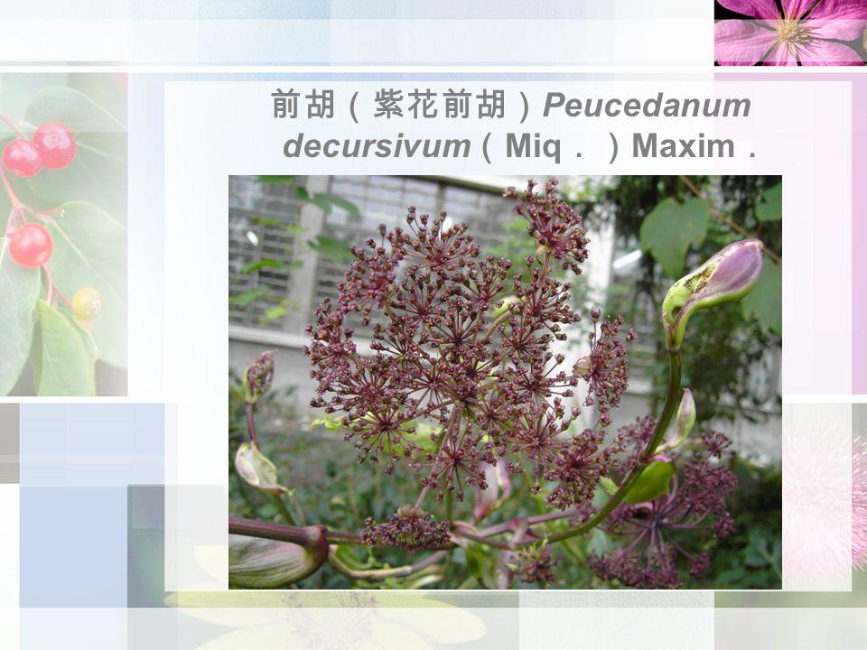 前胡(紫花前胡) Peucedanum decursivum ( Miq .) Maxim .