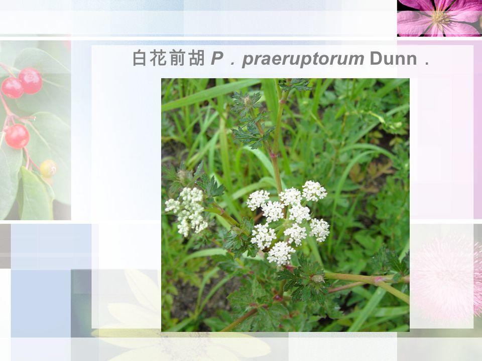 白花前胡 P . praeruptorum Dunn .