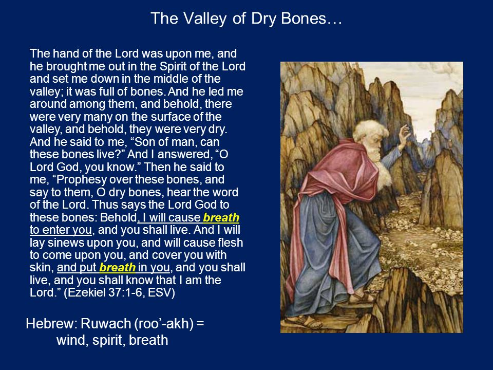 The Valley of Dry Bones… The hand of the Lord was upon me, and he brought me out in the Spirit of the Lord and set me down in the middle of the valley; it was full of bones.